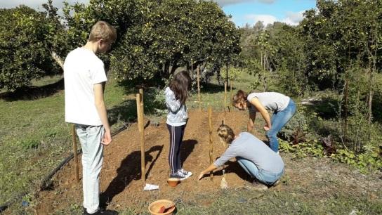 aanplant in voedselbos